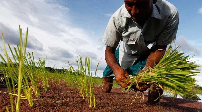 Farm loan disbursement below target
