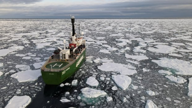 Arctic sea ice shrinks to 2nd lowest level in 4 decades