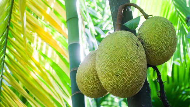 BBC - Travel - Jackfruit: the 'vegan sensation' that saved Sri Lanka