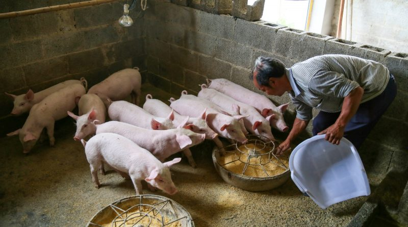 China's pork prices rise at the slowest pace in more than a year