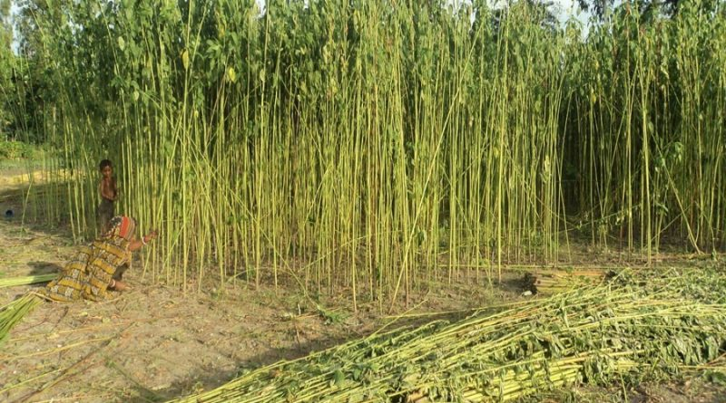 Incentives for agro- and jute-processing units in EPZs