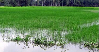 Flood damages Tk 255.73cr crops in Rajshahi division
