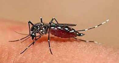 Eight new dengue cases detected in 24 hrs – National – observerbd.com