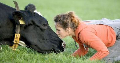 BBC - Travel - Is cow hugging the world's new wellness trend?