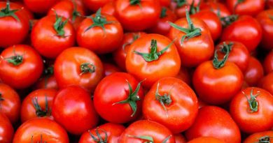 Tomato appears in Godagari markets – Business – observerbd.com