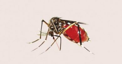 20 dengue cases reported in 24 hours, adding to Covid woes