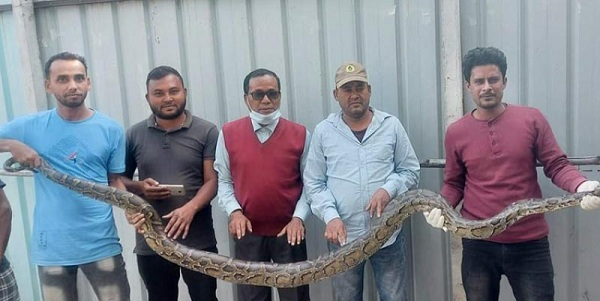 10-feet-long python rescued in Sirajganj  – Countryside – observerbd.com
