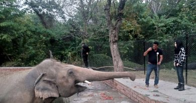 Cher Visits 'World's Loneliest Elephant' She Helped Rescue from Captivity