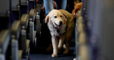 U.S. to Limit Service Animals on Planes to Dogs Only