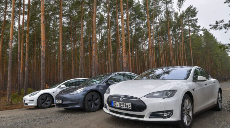 Tesla progress on German factory slowed by sleeping snakes