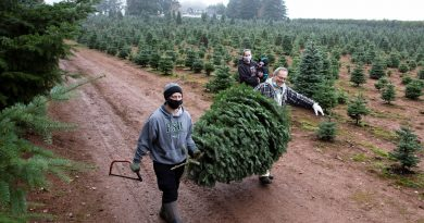 Christmas tree sales are telling a holly, jolly economic story