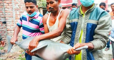 Three fined for catching dolphin – Countryside – observerbd.com
