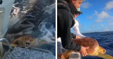 Wild Video of Two Men Saving Turtle From a Tiger Shark Attack