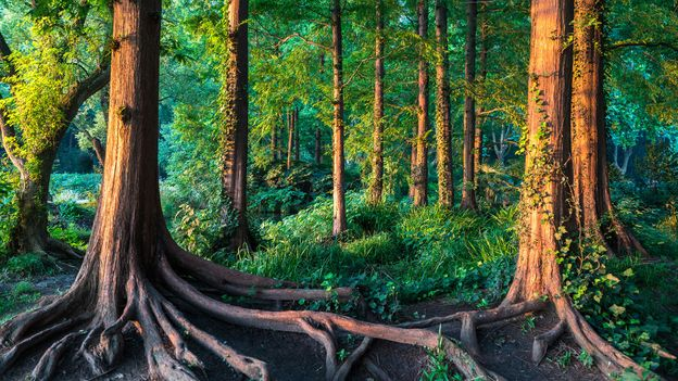 BBC - Travel - The tiny forests designed by feng shui