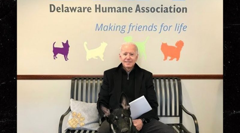 Joe Biden's Rescue Dog Major will be Indogurated