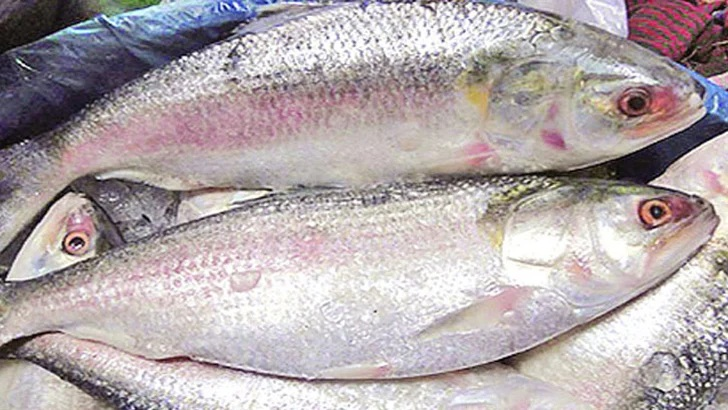 'It's better not to export Hilsa over next five years' – National – observerbd.com
