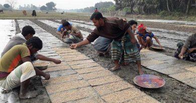Boro planting by rice transplanters in Rajshahi begins – Countryside – observerbd.com