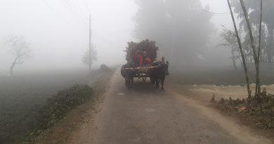 8.5˚C temperature recorded in Tentulia – Countryside – observerbd.com