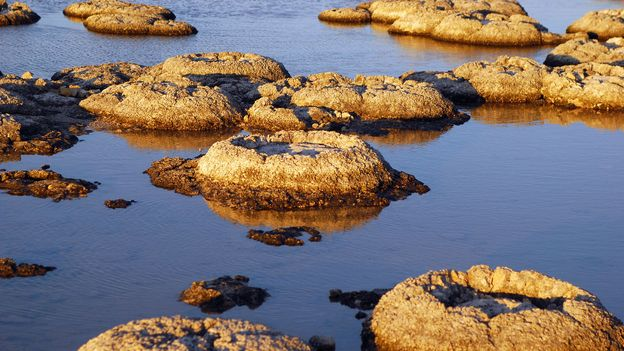 BBC - Travel - Stromatolites: The Earth's oldest living lifeforms