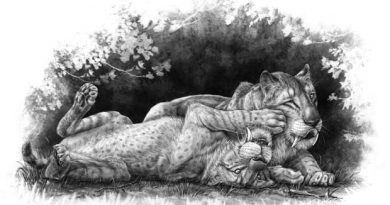 Sabre-toothed tiger cub fossils may reveal family secrets